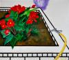 Agnes Maes  - Begonia in bloembak met tuinslang